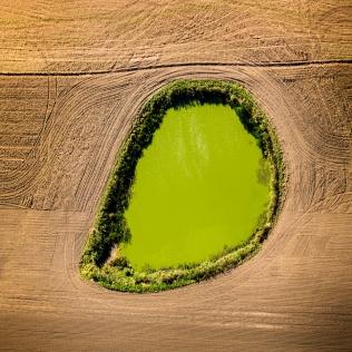 Teich mit blühenden Algen