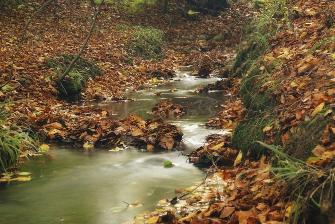 Bach im Bergenholz bei Malente