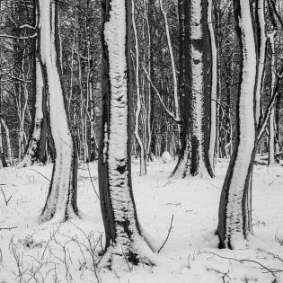 Tanzende Bäume