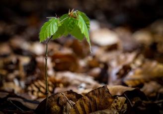 Der Neue im Wald