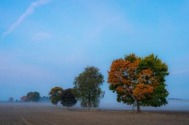 Baumreihe bei Curau