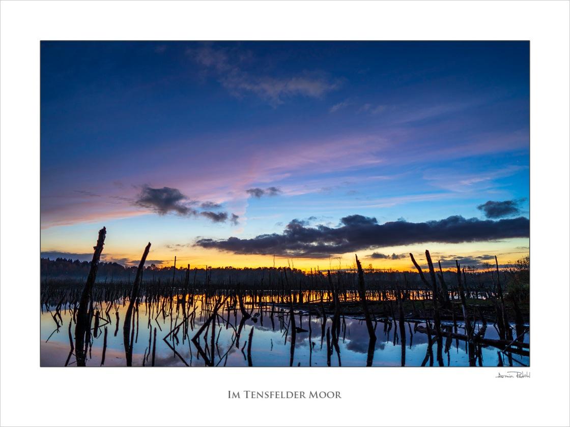 Tensfelder Moor